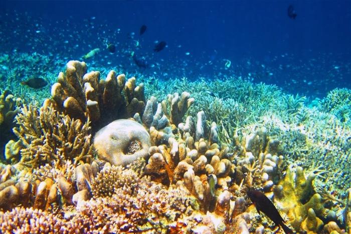 Keindahan Bawah Laut Kepulauan Derawan