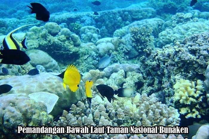 Bawah Laut Taman Nasional Bunaken