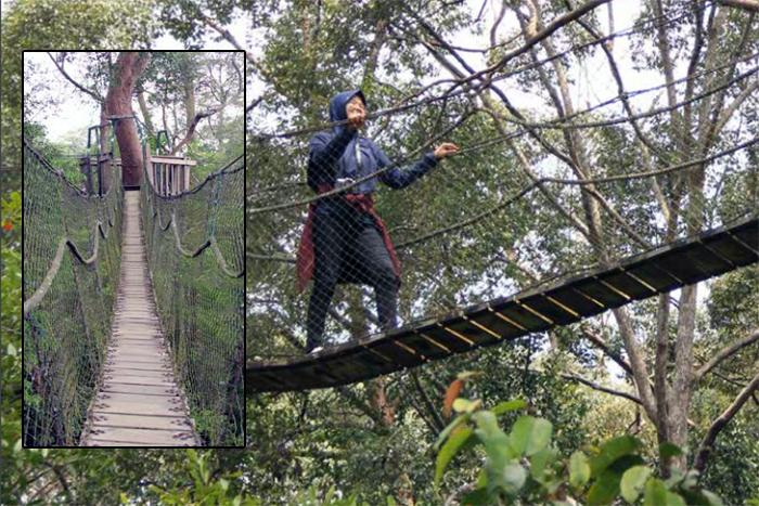 Jembatan Gantung Bukit Bangkirai